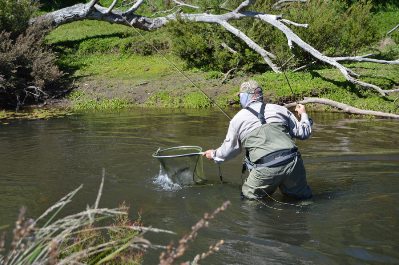 Rainbow lodge tasmania for Fly fishing competitions